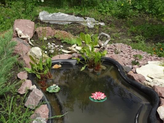 Частуха подорожниковая- водное растение